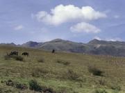 The Lonely Shepherd - Ecuador 1991